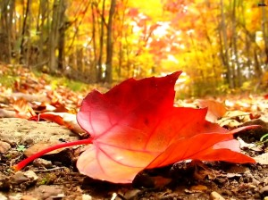 Fall-Leaves-Desktop-Background-Fallen-Leaves-on-the-Ground
